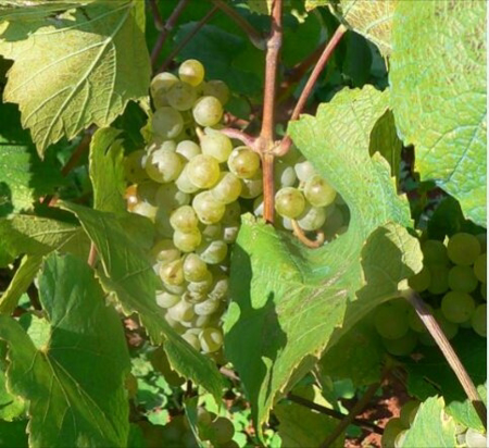 Imagen de categoría Vinos y Cavas